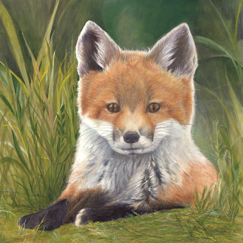 Fox 1 qtzkbm