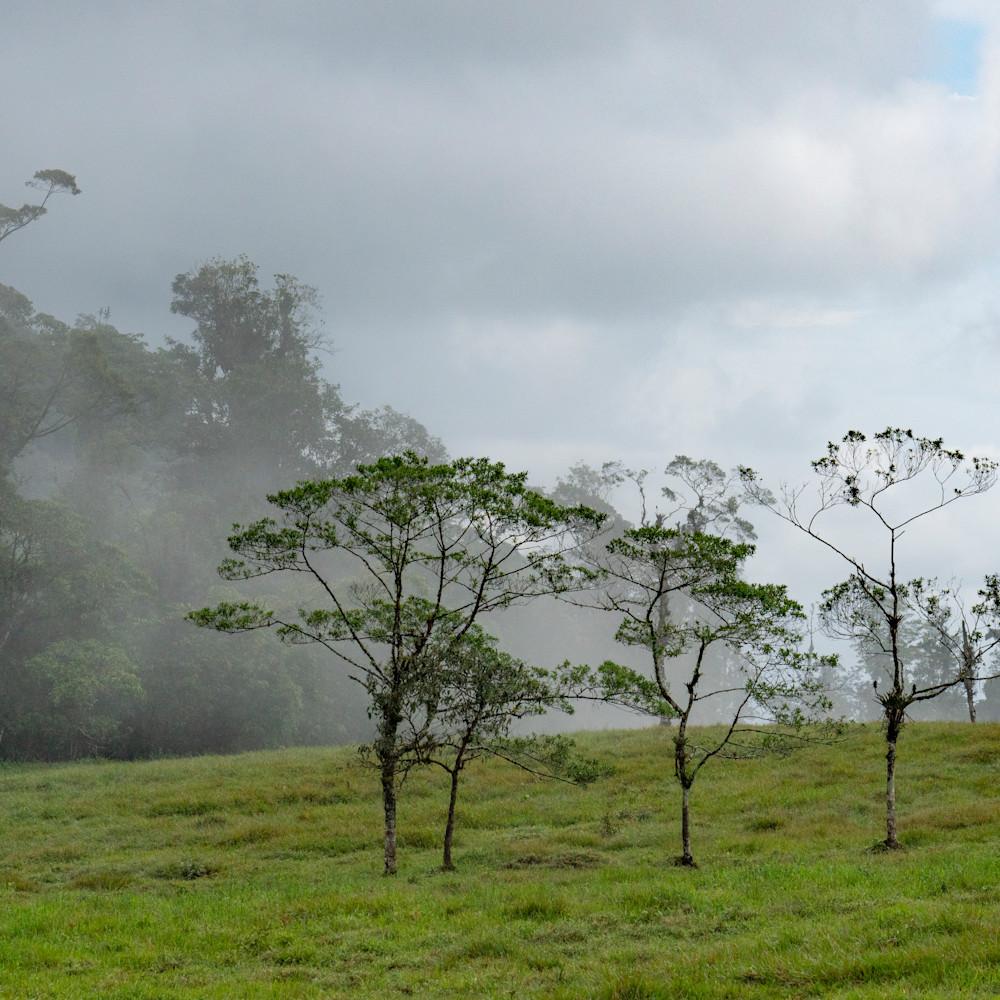 Cloud forest 2x3 print co0zke