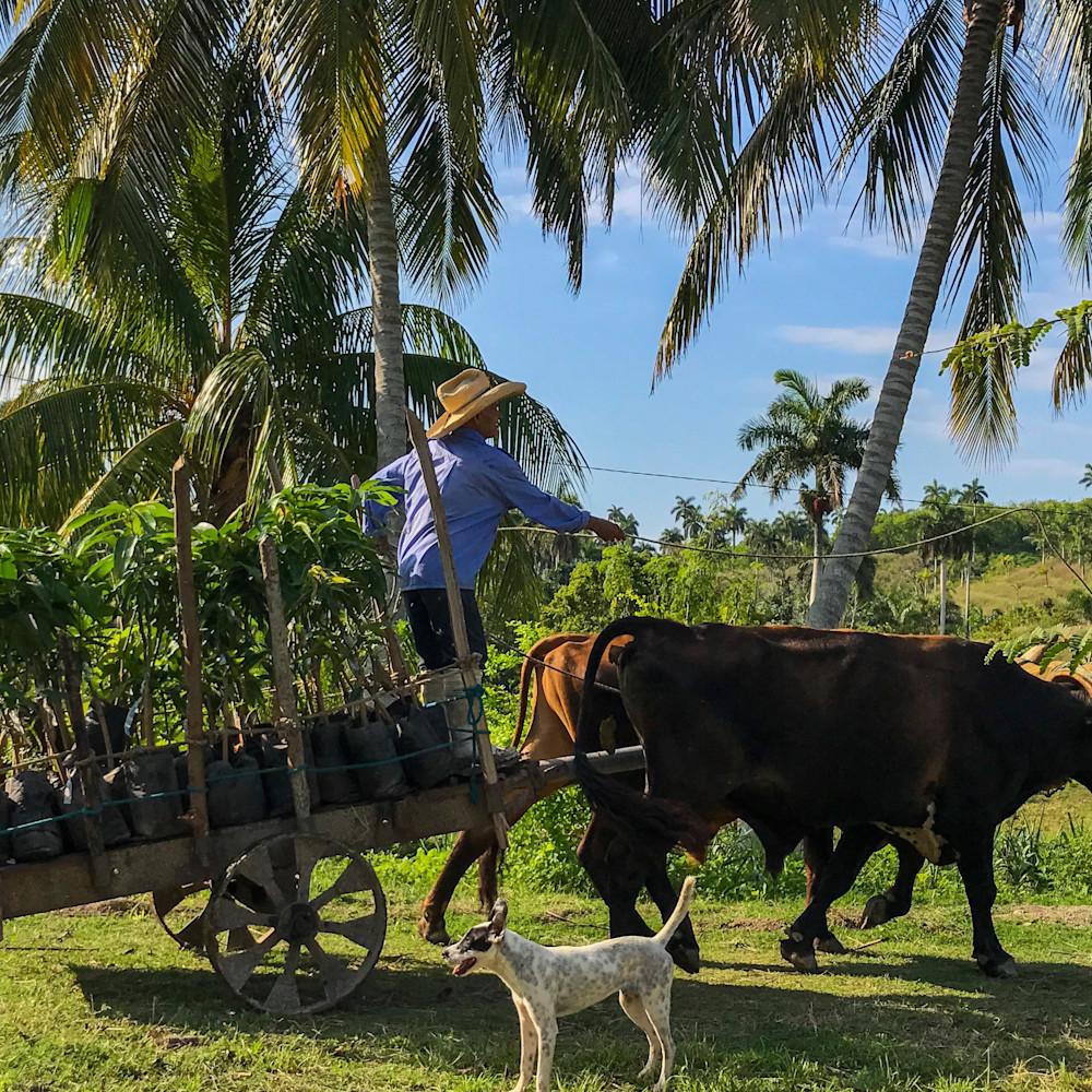 Cuban mango farmer 2x3 print kuviqz