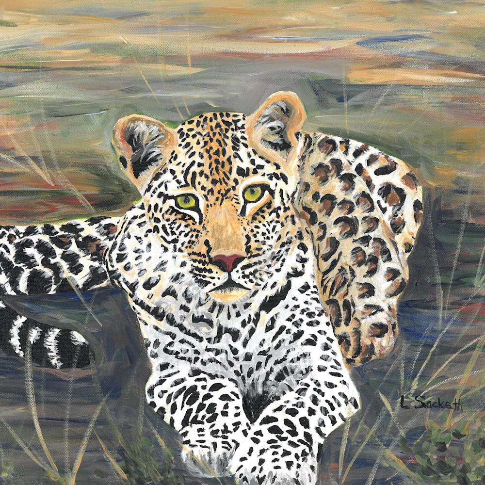 Leopard resting 11x14 ksnu35