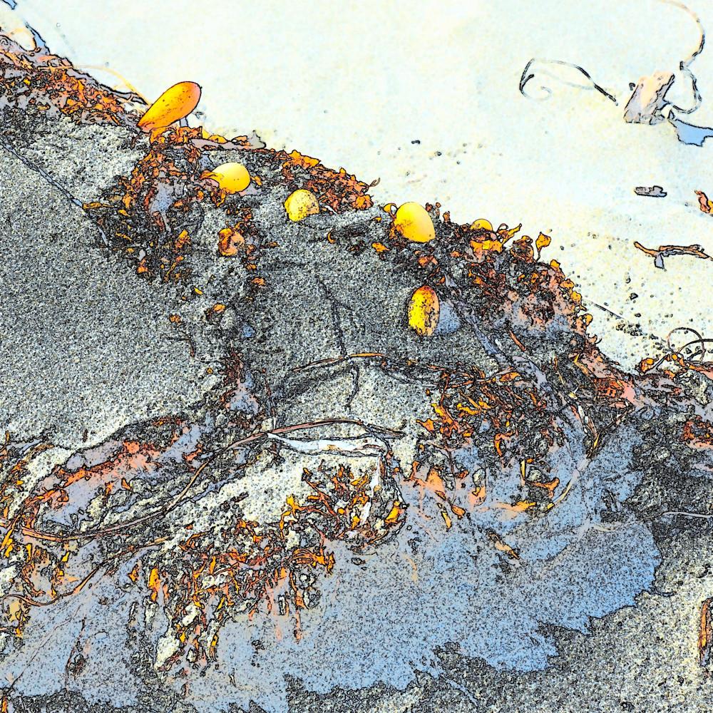 Kelp detail bmdjjb