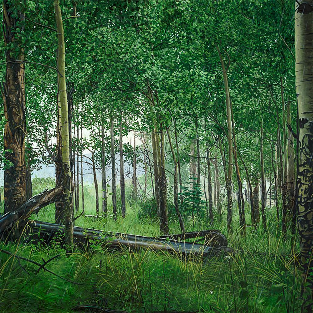 Aspen forest in rain nl8jjx