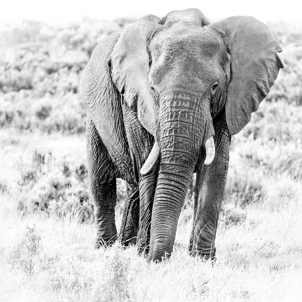 Elephant edited 002b 03791 mr4det