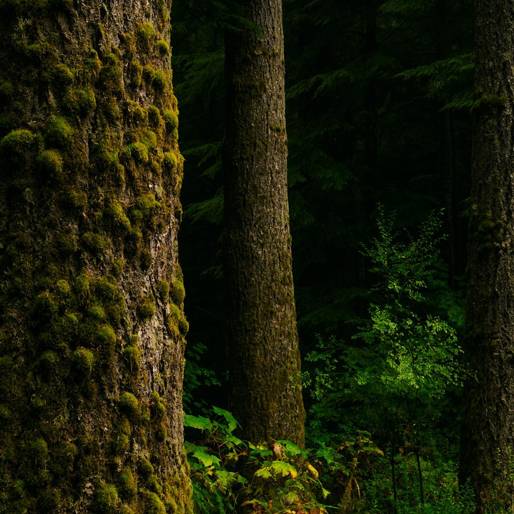 Summer forest butte creek washington 2020 n2ofop
