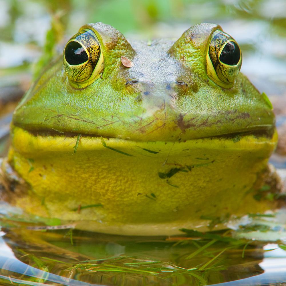 Kermit abveph