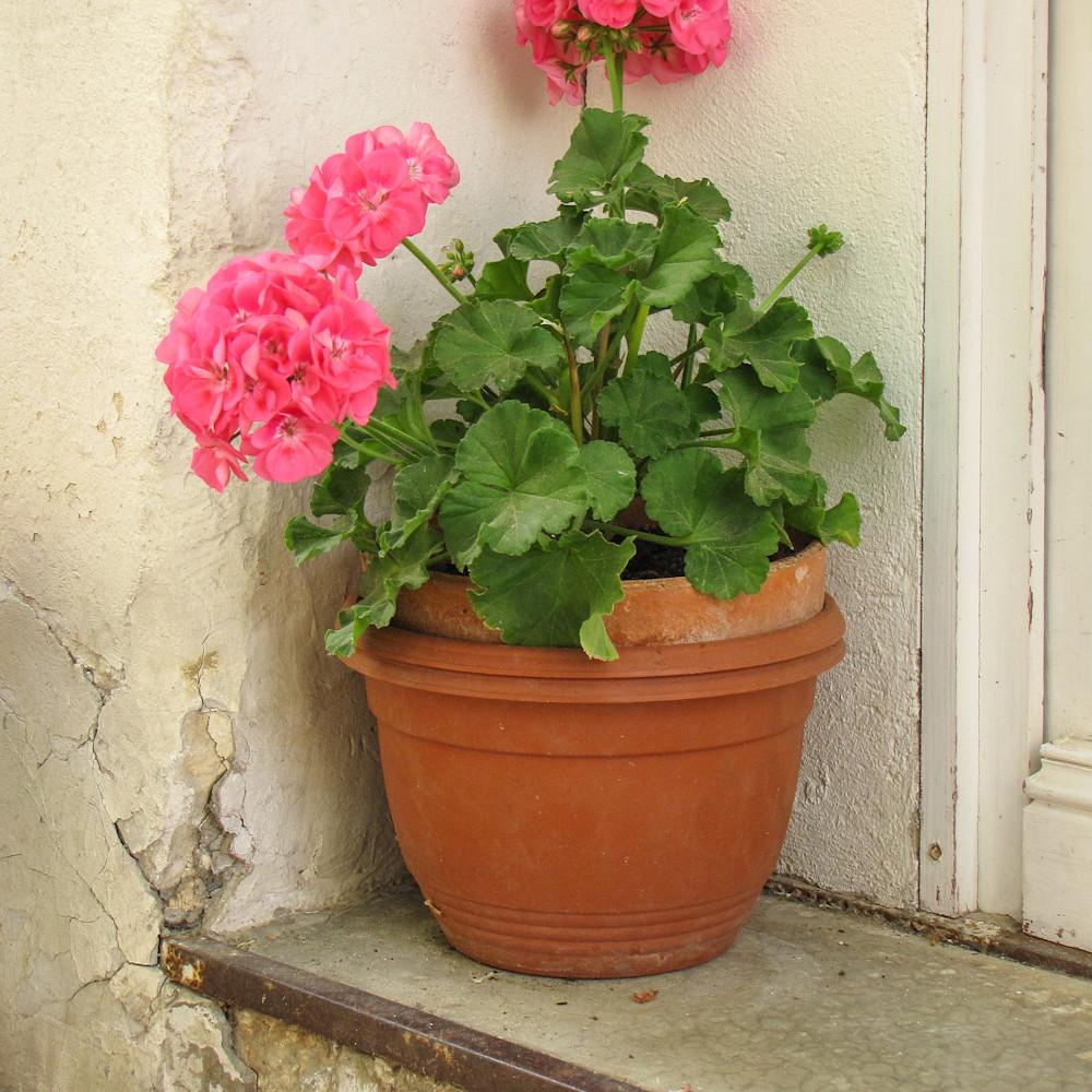 40x30 geranium pot  bielow