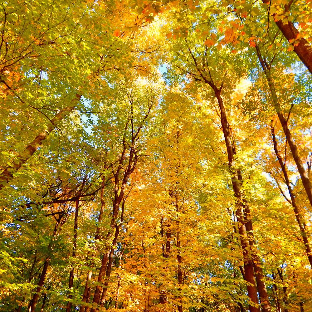 Fall magic minnetonka trail rqtq6p