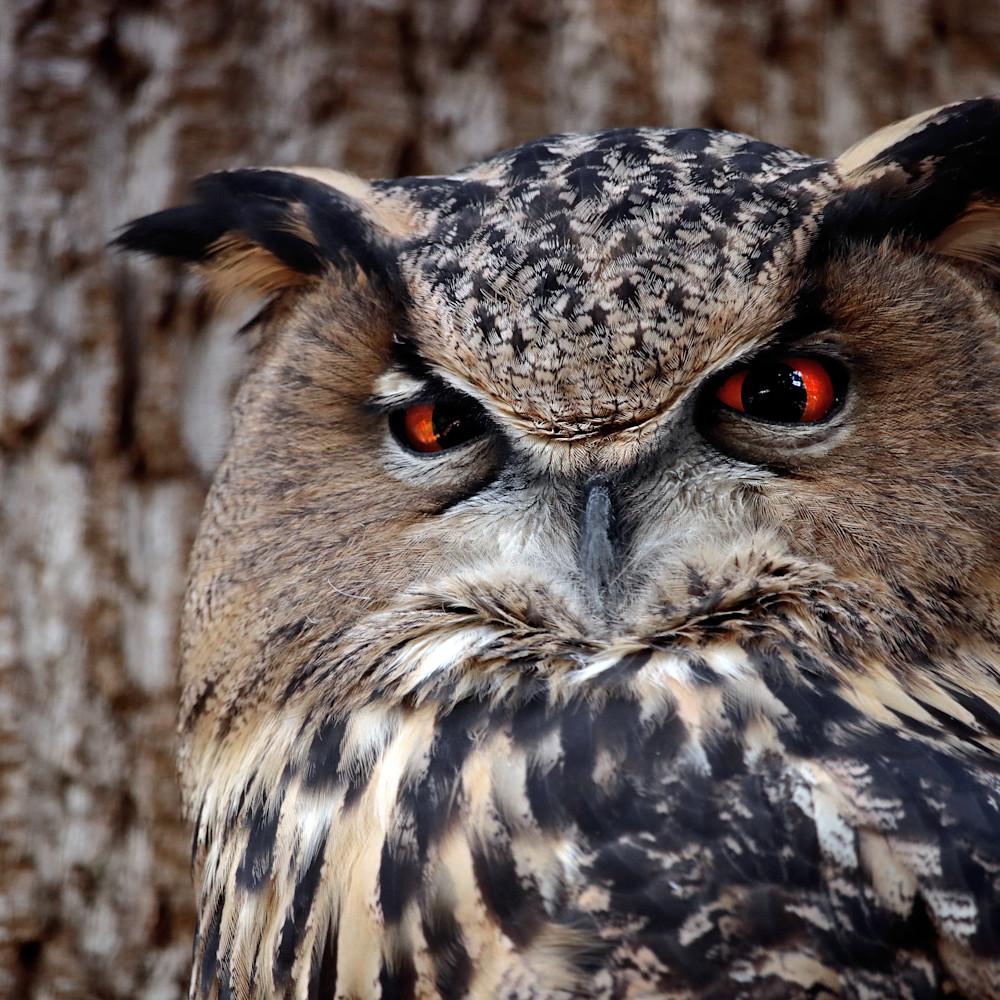 Owl zo4nhz