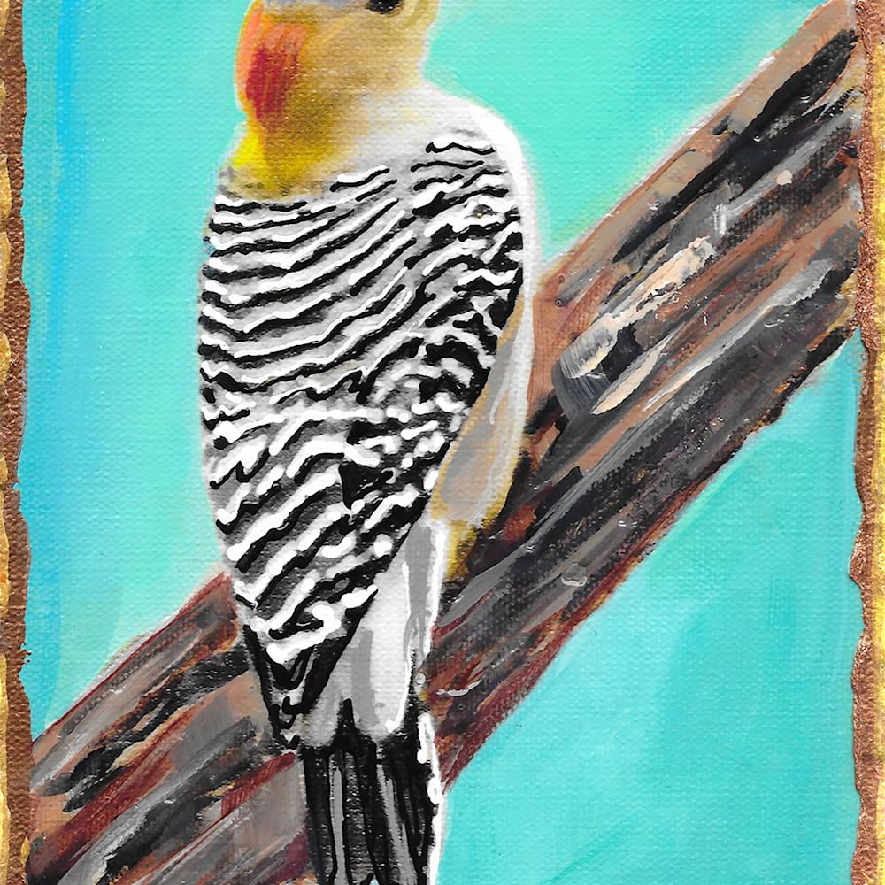 Golden fronted woodpecker eyowjp