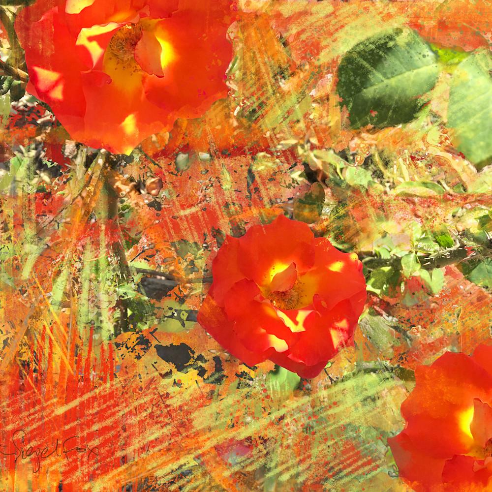 Orangeredroses 26x20 290dpi fpjbmv