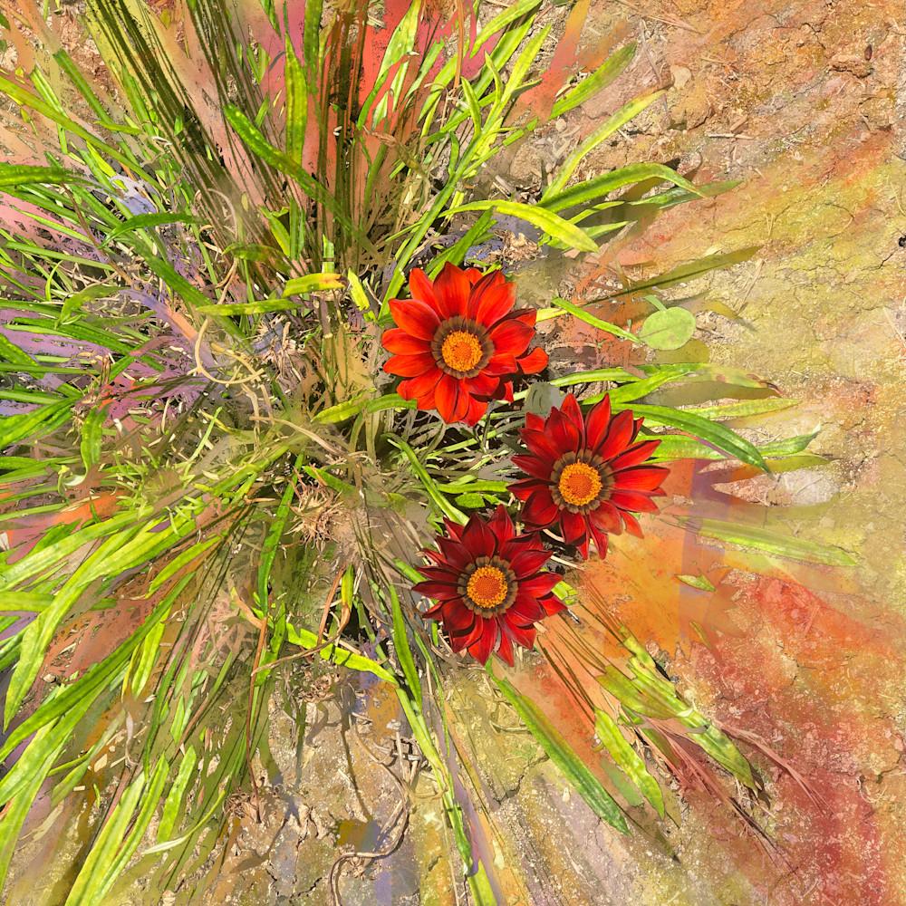 Red sunflowers 20x26 300dpi f35eo3