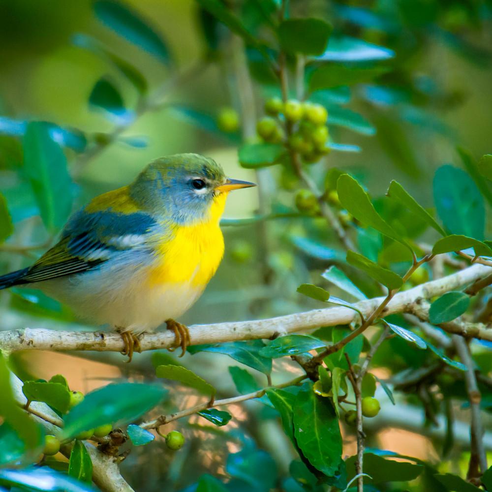 By birds 20201007 0217 kj0phq