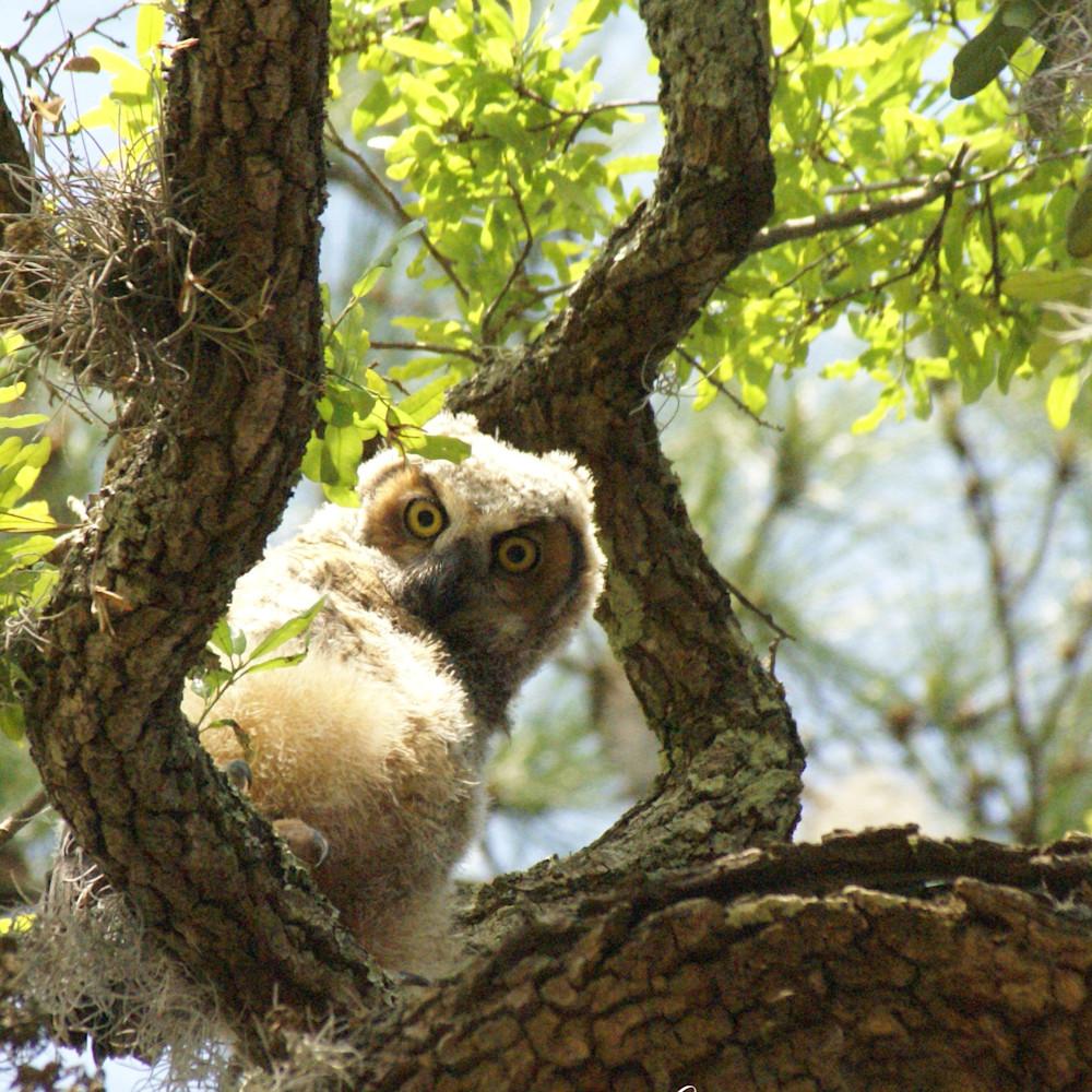 Special owl g270nu