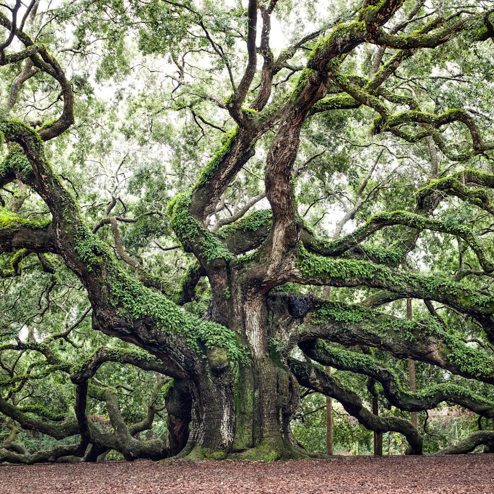 Oak al5byd