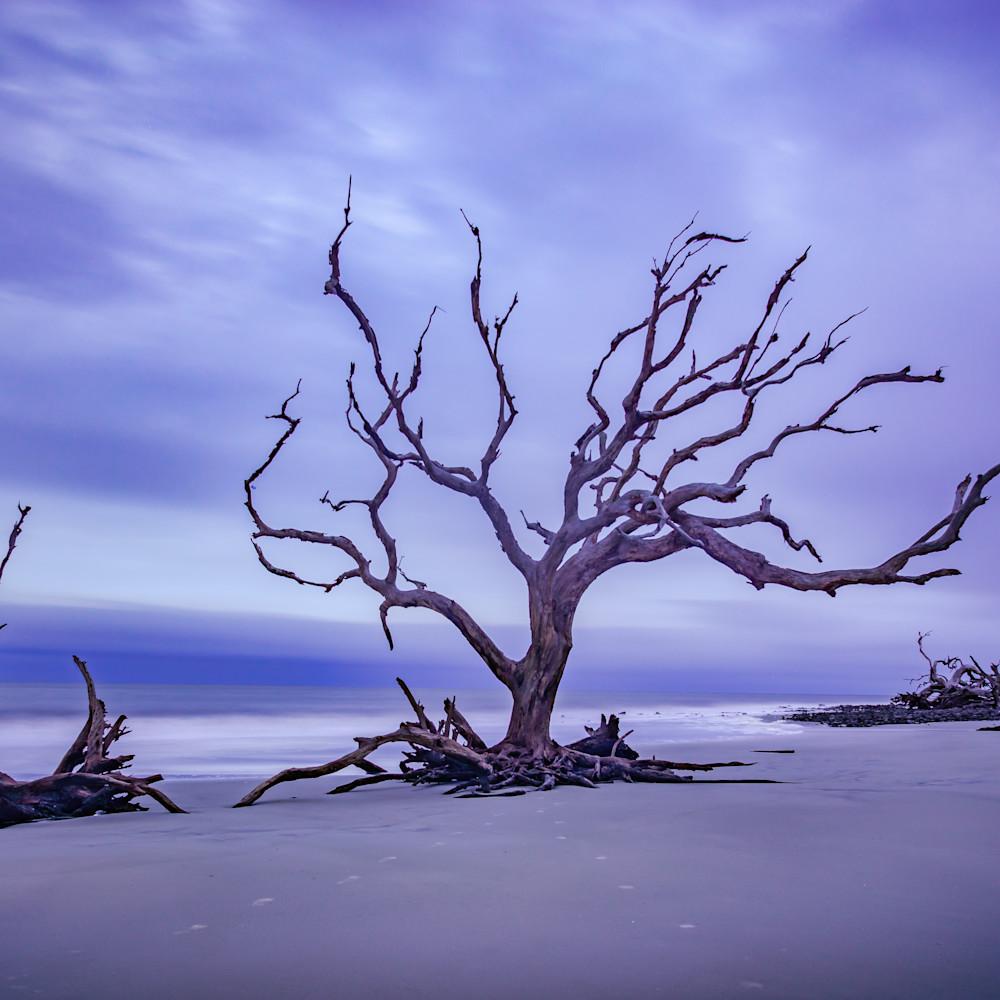 Driftwood beach sunrise anrr1u