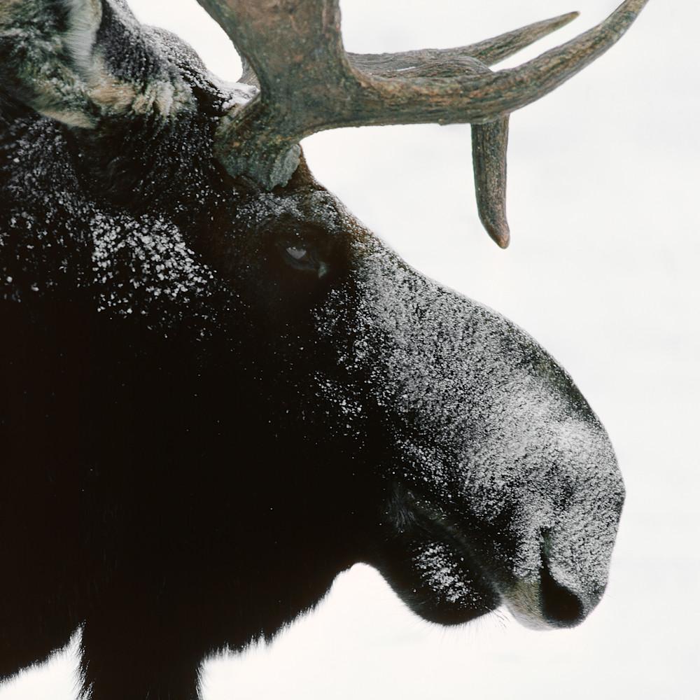 Artsy fartsy moose xtan0l