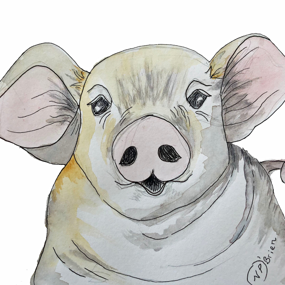 Purty pig white background et5ut3