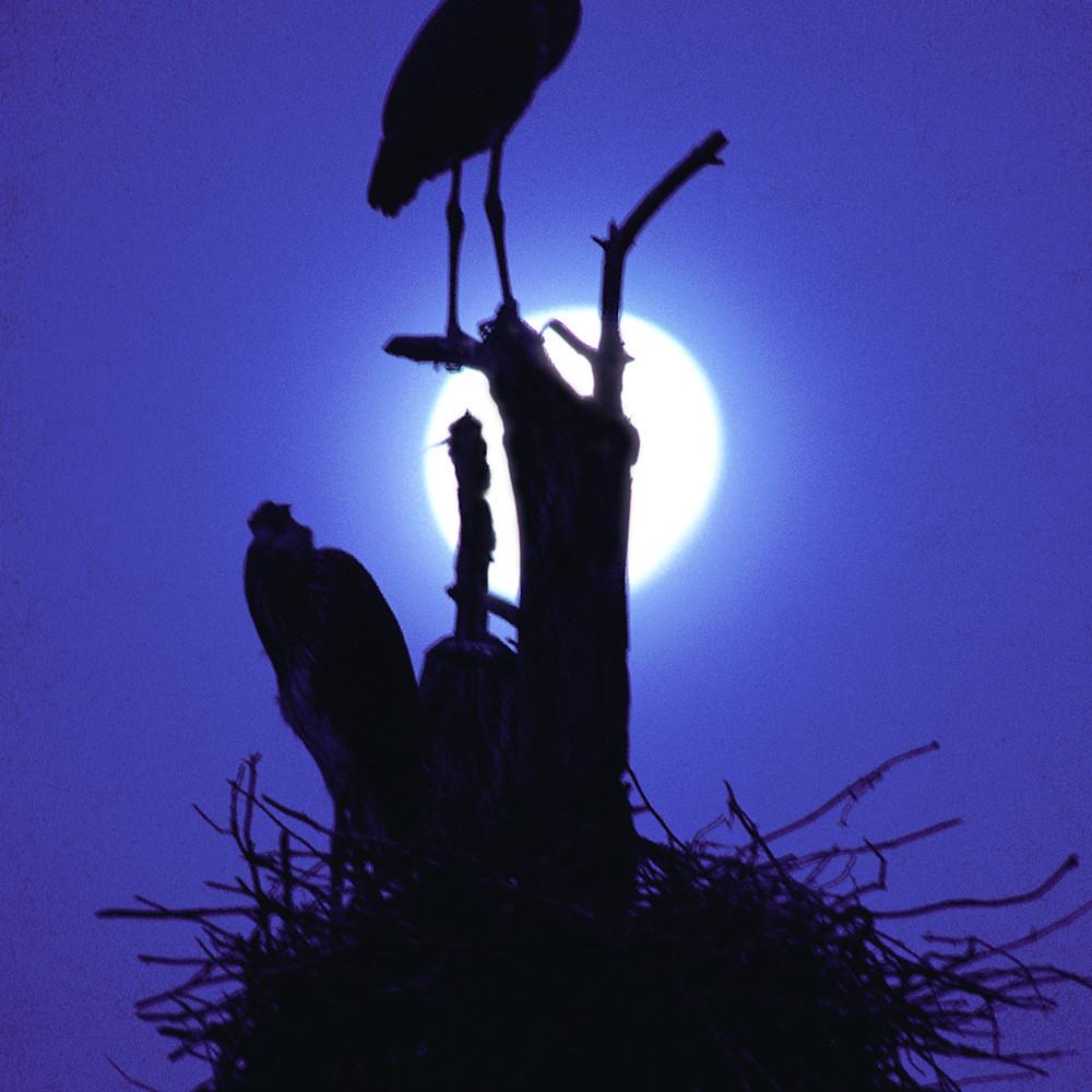 Great blue heron silhouette bwm7sb
