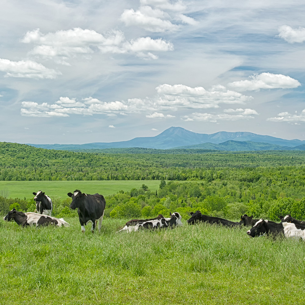 Cows and mt katahdin pnbpzb
