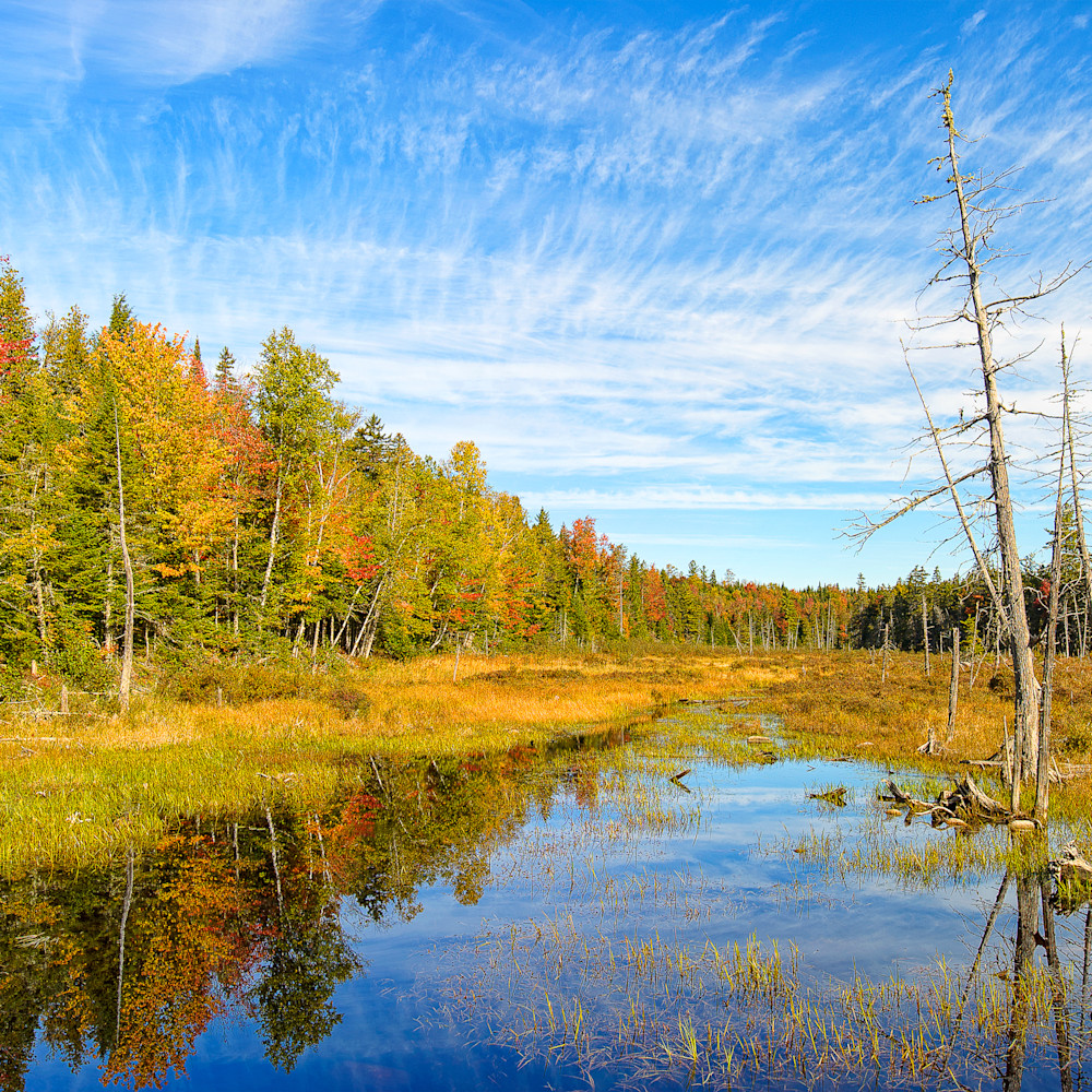 First marsh katahdin woods and waters national monument zhi5c8