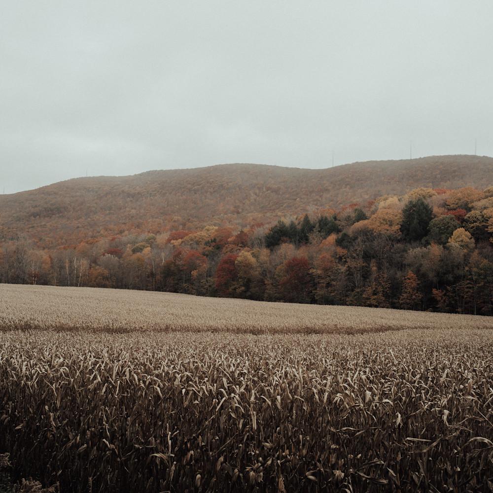 Field of dreams v1rrs9