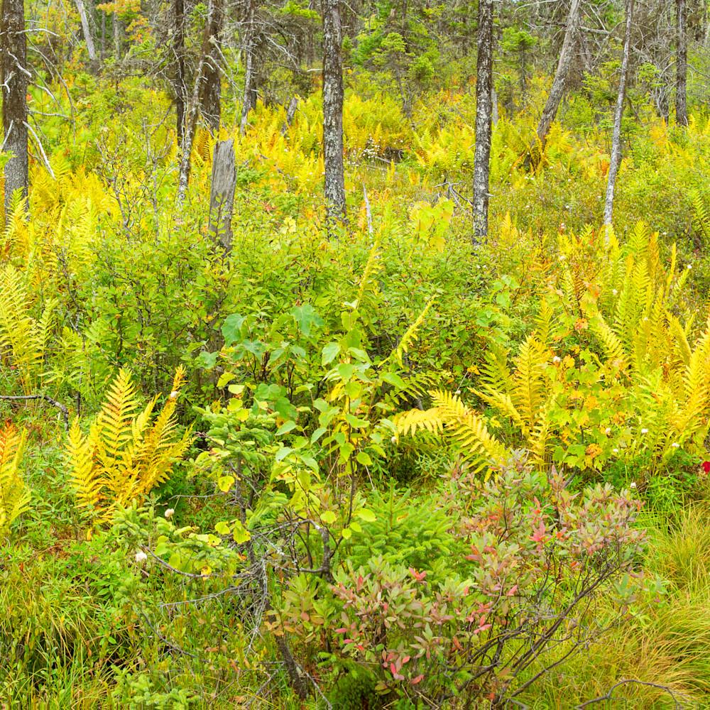 Black spruce bog kwwnm y27mqx