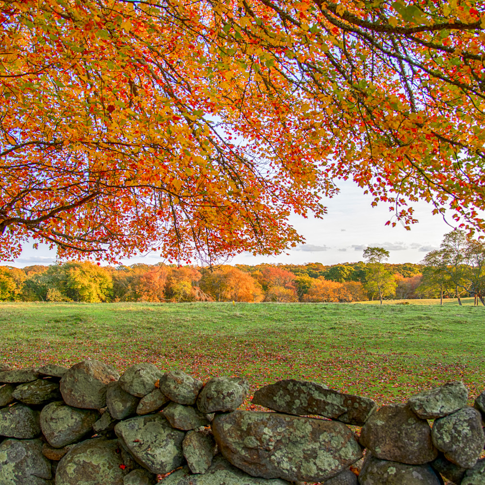 Middle road fall leaves stone wall jsskze