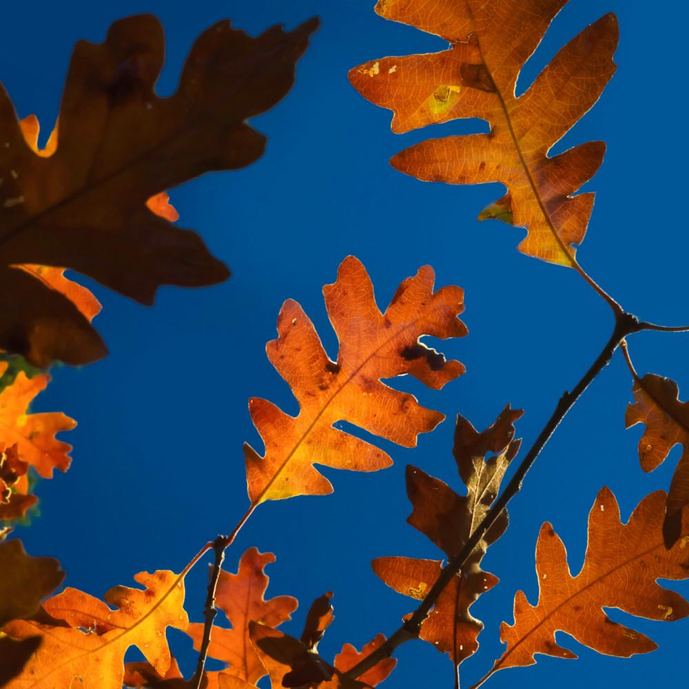 Autumn beam   ashley wilson tjh6md