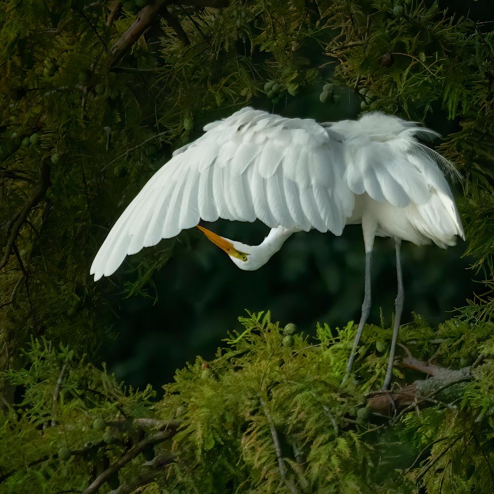 Egret upside down e 8352 rlt20 final nxfkcz