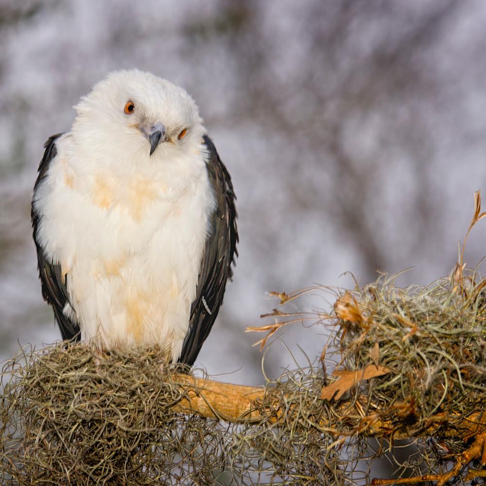 Has birds 0159 qqo8mm
