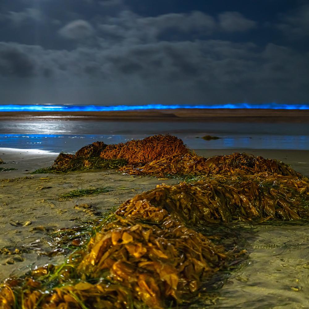 La jolla shores bioluminescence and seaweed 5 2 2020 itg5s3