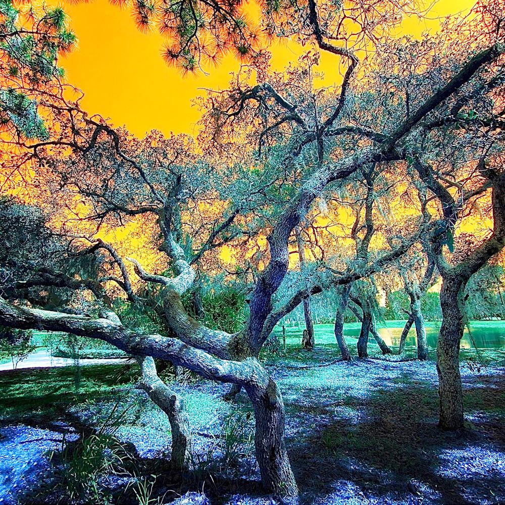 Botanical rainbow tree h6qfeq