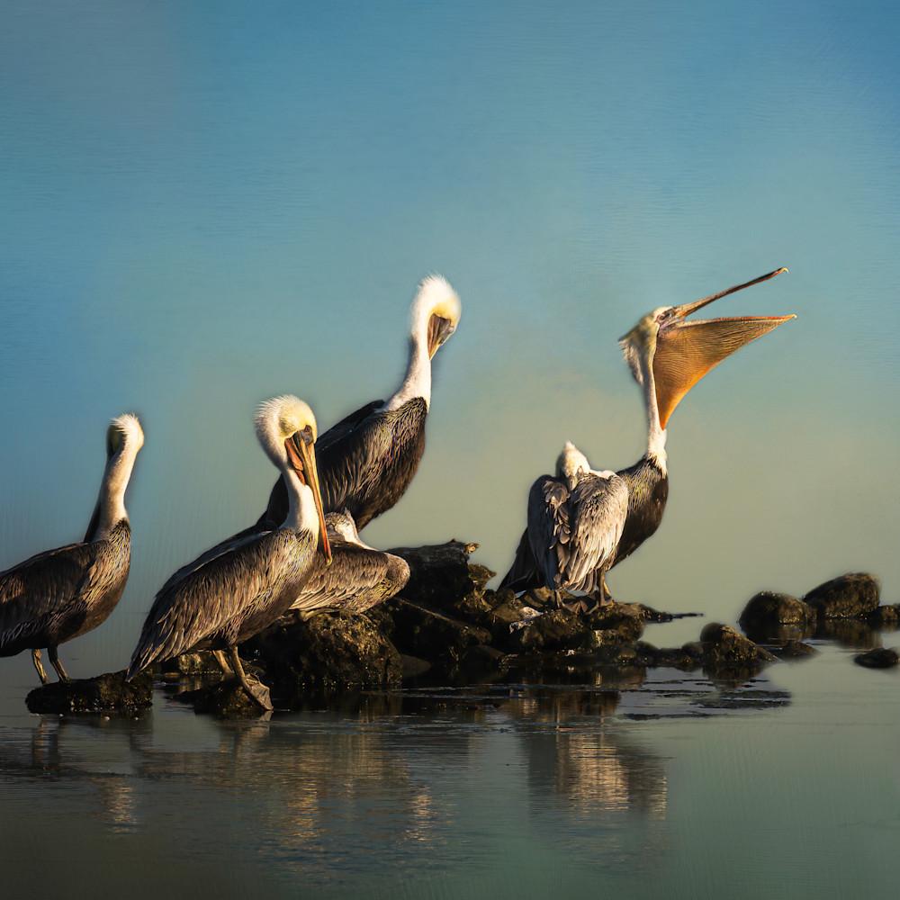 Malibu pelican colony 20201002  dsc9728 edit copy qmujj3