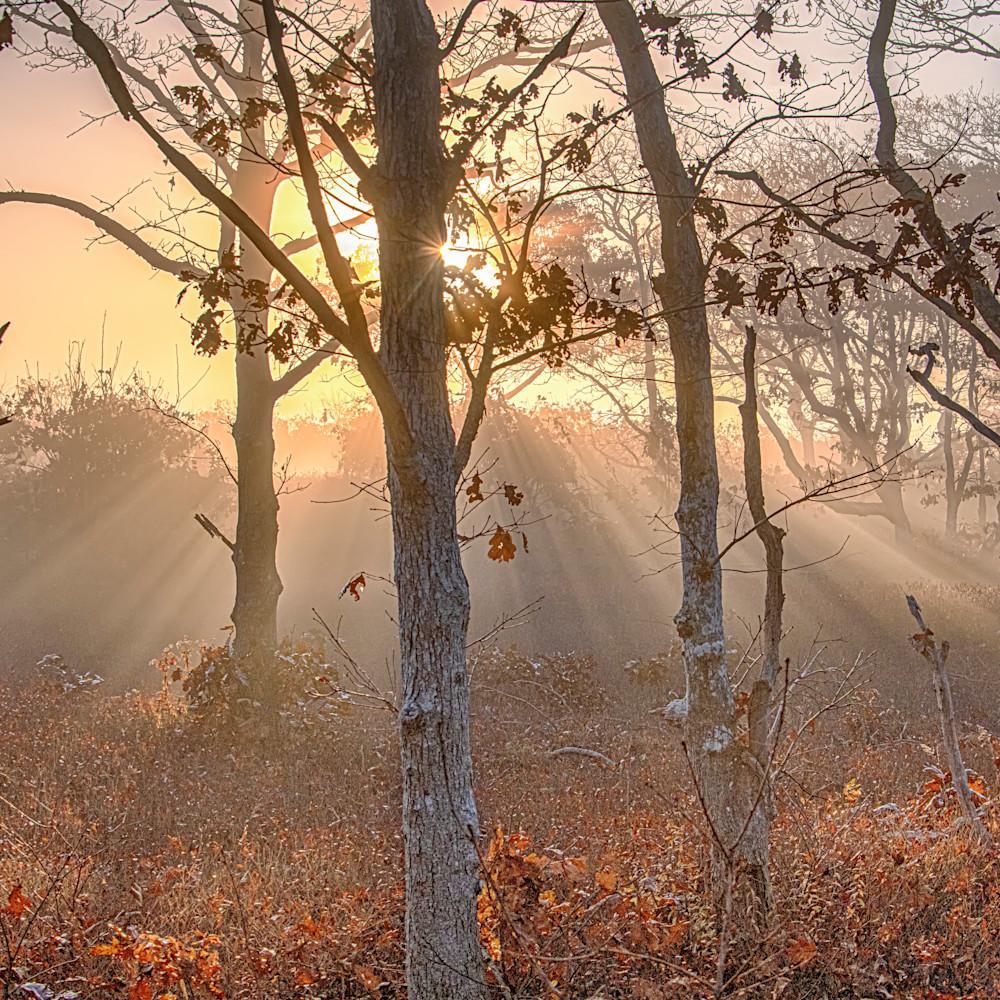 Long point fall morning fog sun beams tmfqdp