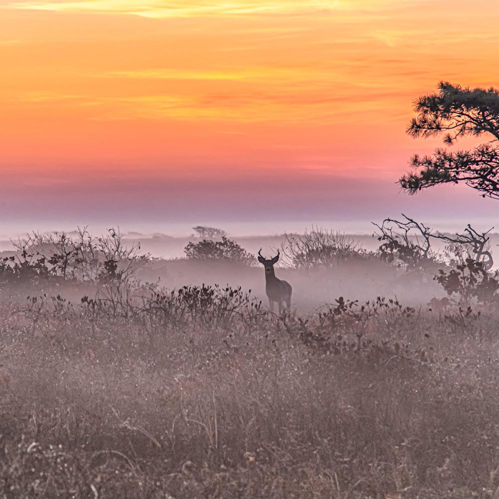 Long point buck fall sunrise copy fxuyjk