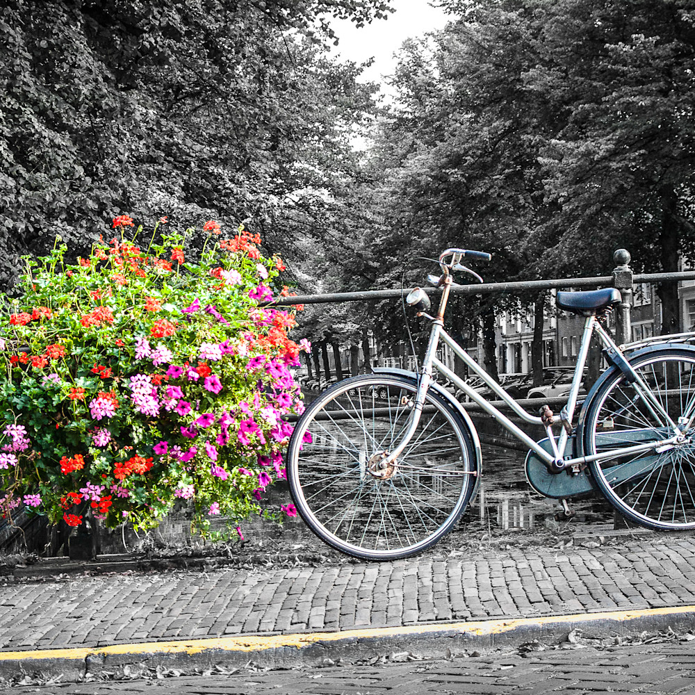 Petals and pedals amsterdam anwsqy