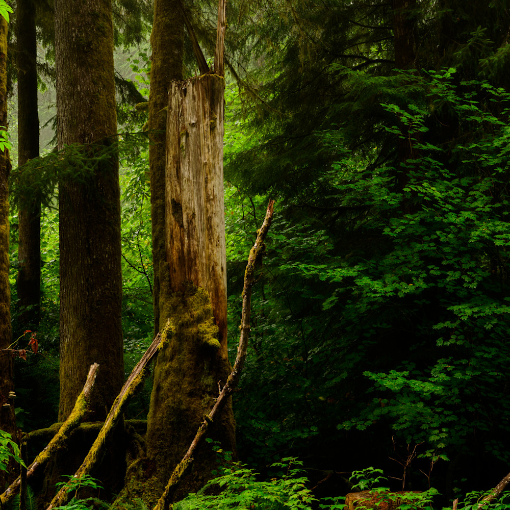 Late summer forest pacific county washington 2020 jxubud