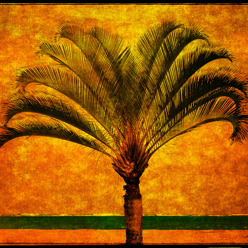 Royal palm 1815 x9jbv4