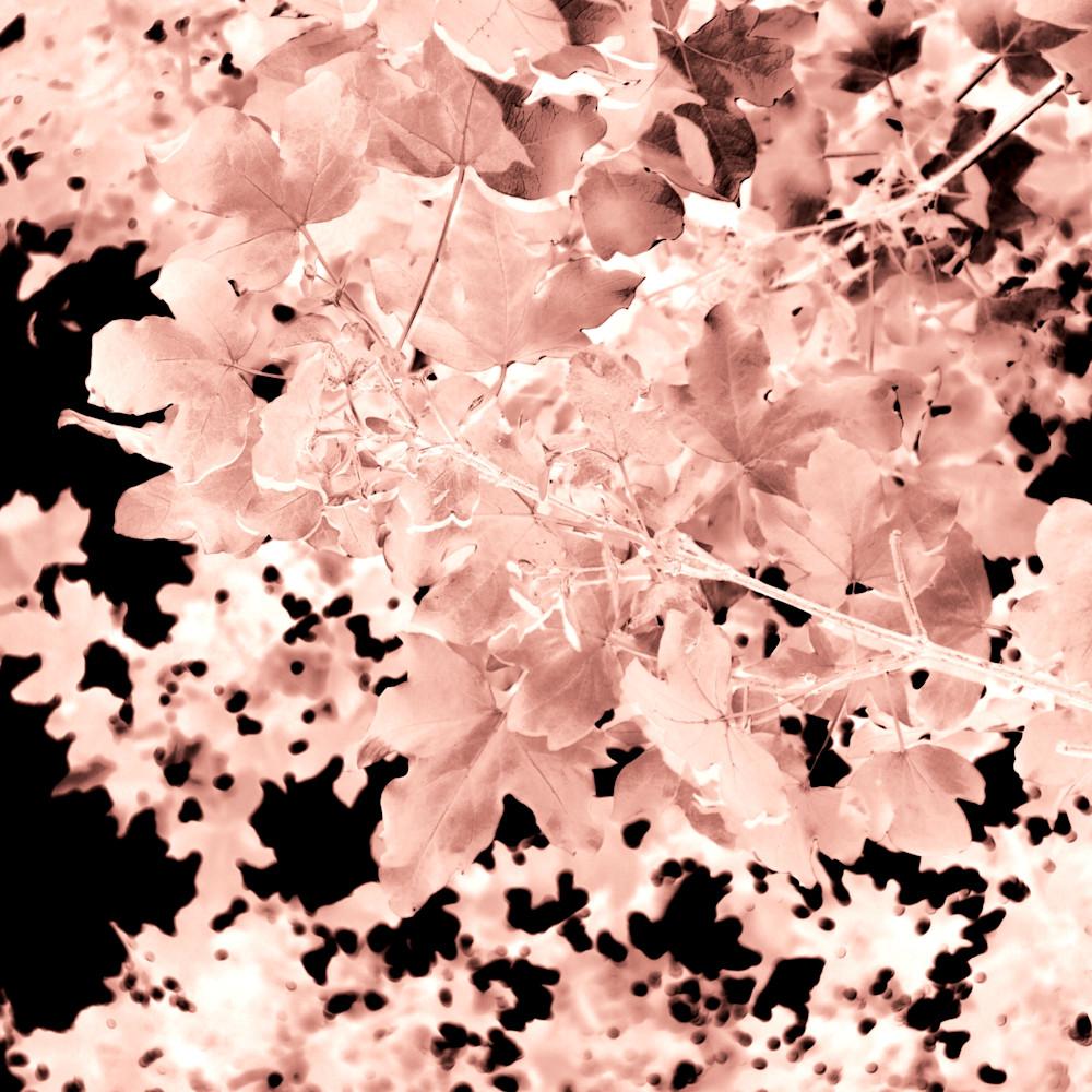Autumnal leaves fo40ik