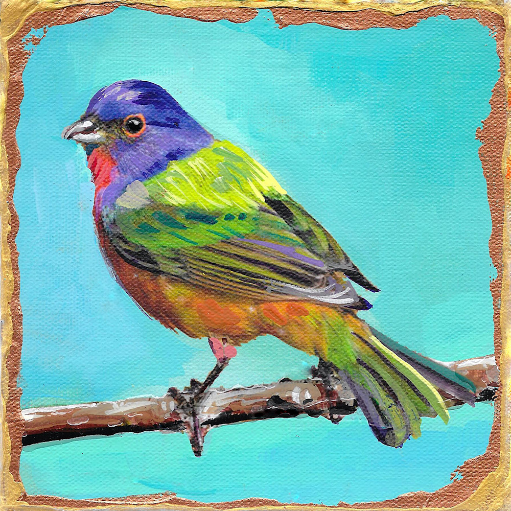 Painted bunting zlwfcx