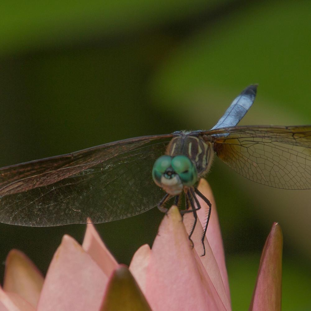 Bug face2 1 g2pjvm