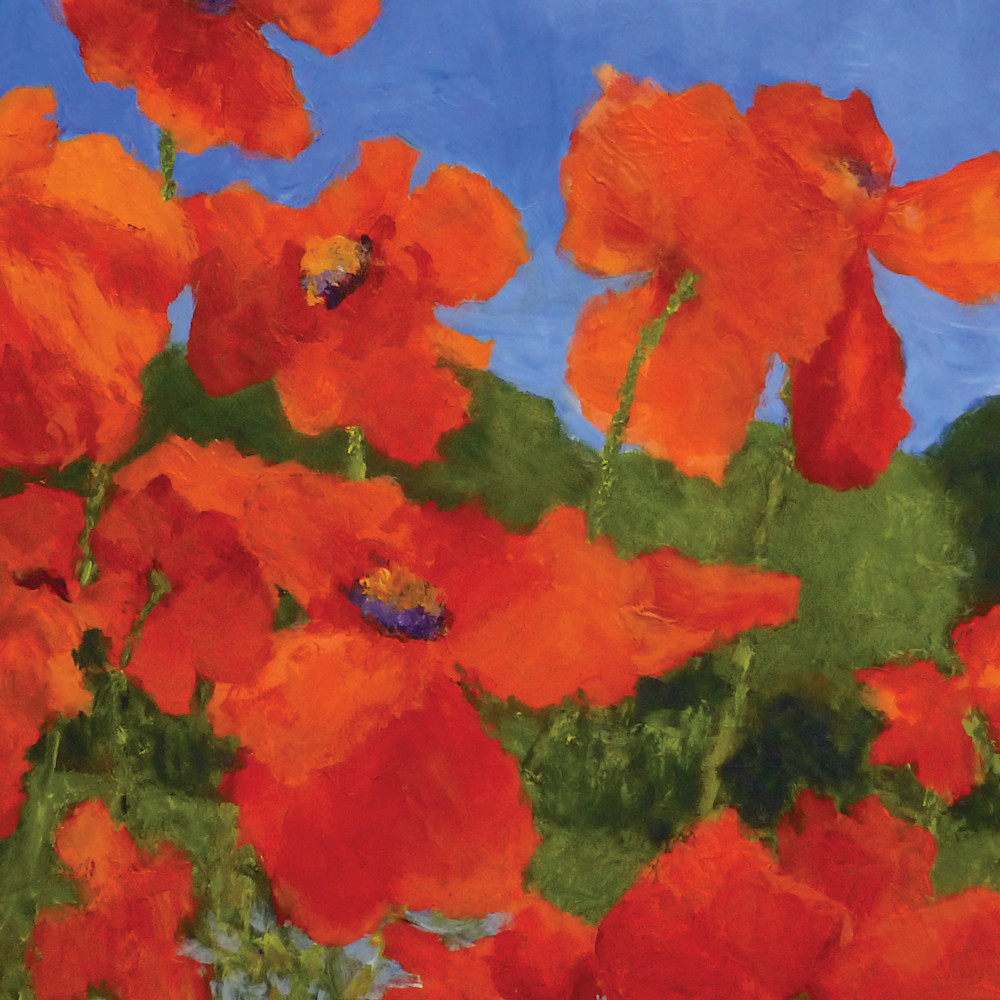 Poppiesnearthemarshnoborder eylhot