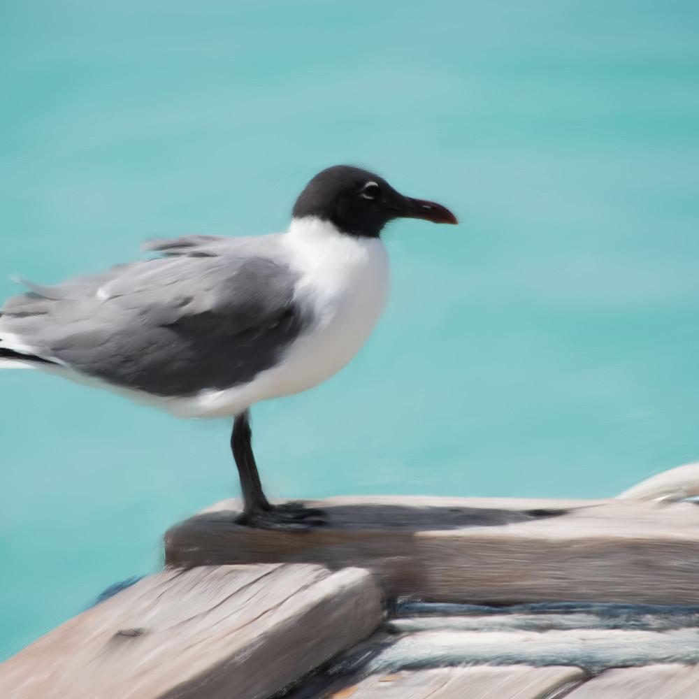 Seagull2 gmm1oe