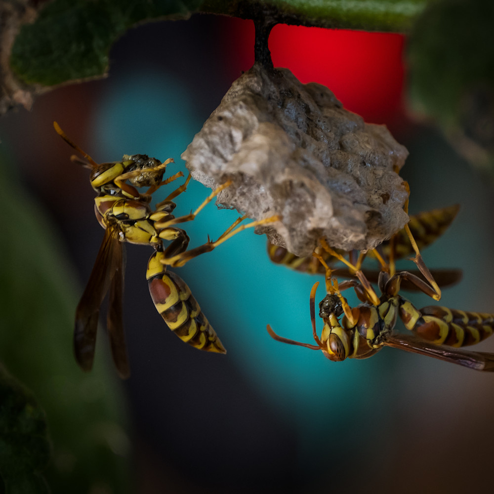Wasps1 ep8bnw