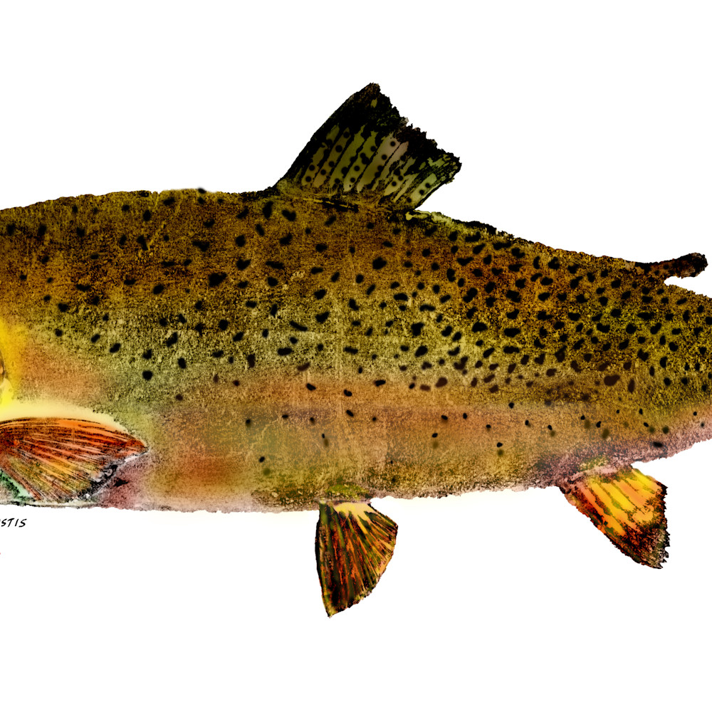 Cutthroat trout asf a5ptto