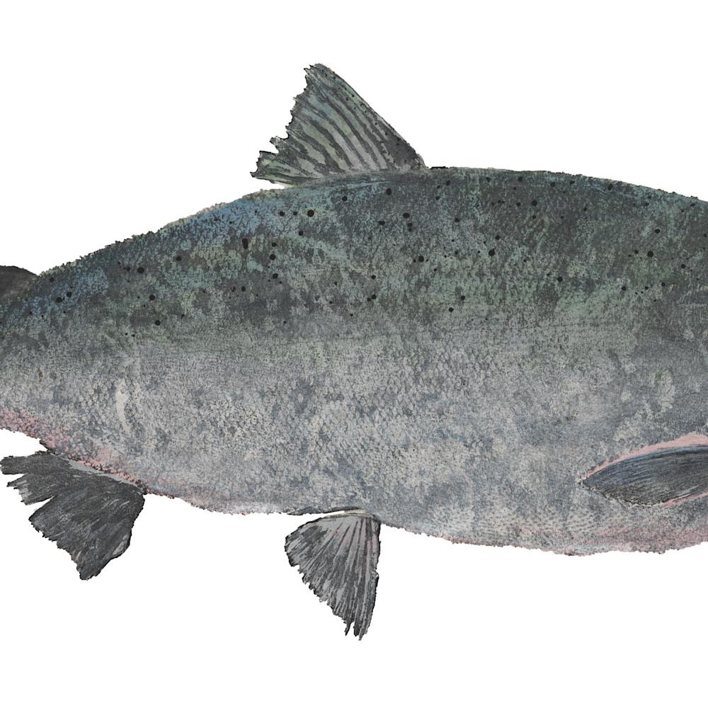 Coho salmon asf wqsf46