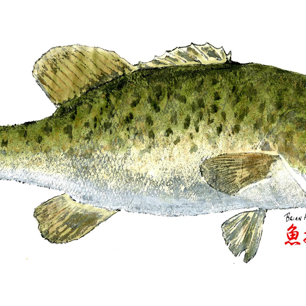 Smallmouth bass asf unoelx