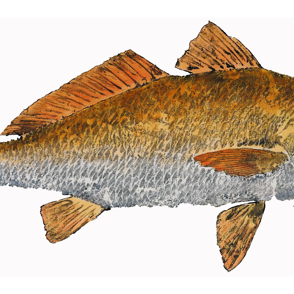 Redfish asf e8f6r6