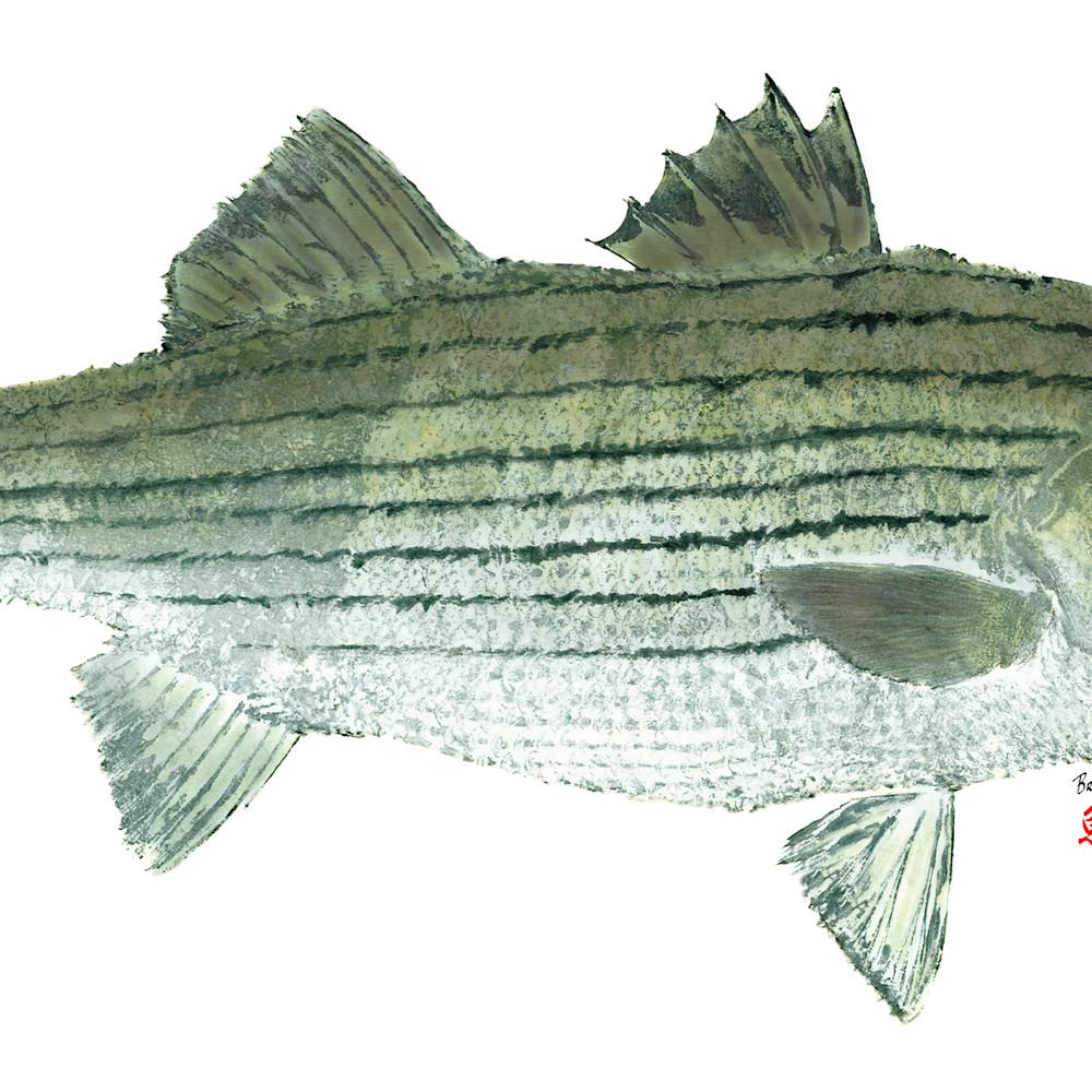 Striped bass asf eznedq