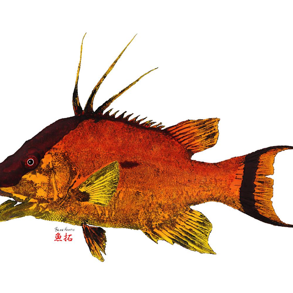 Florida hogfish asf k2g0ha